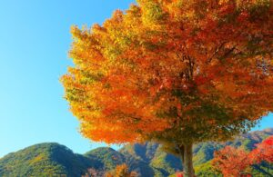 How Changing Seasons Affect Your Skin
